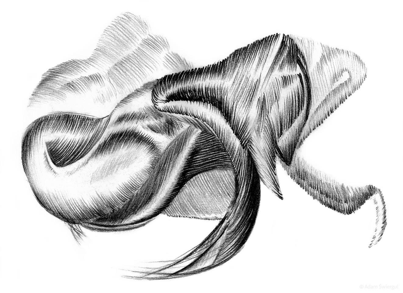 Karbczes - rysunek abstrakcyjny, ołówek