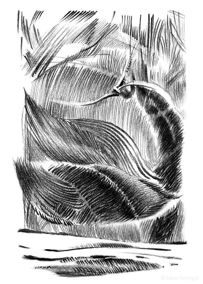 Łabędź