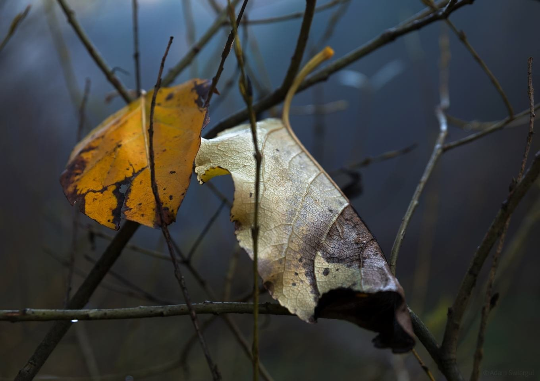 Ostatnie liście - Dolina Kobylańska