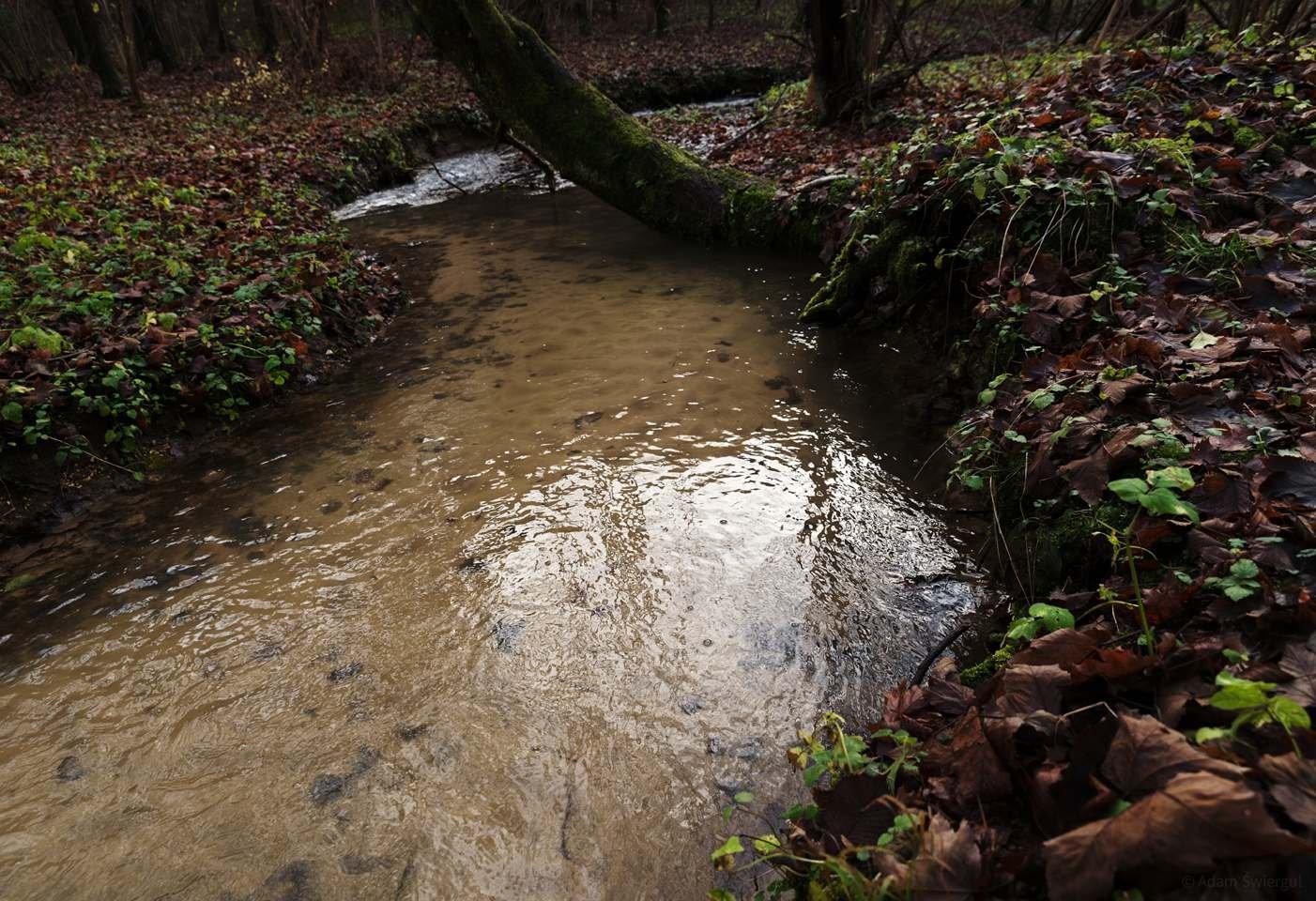 Potok - Dolina Kluczwody