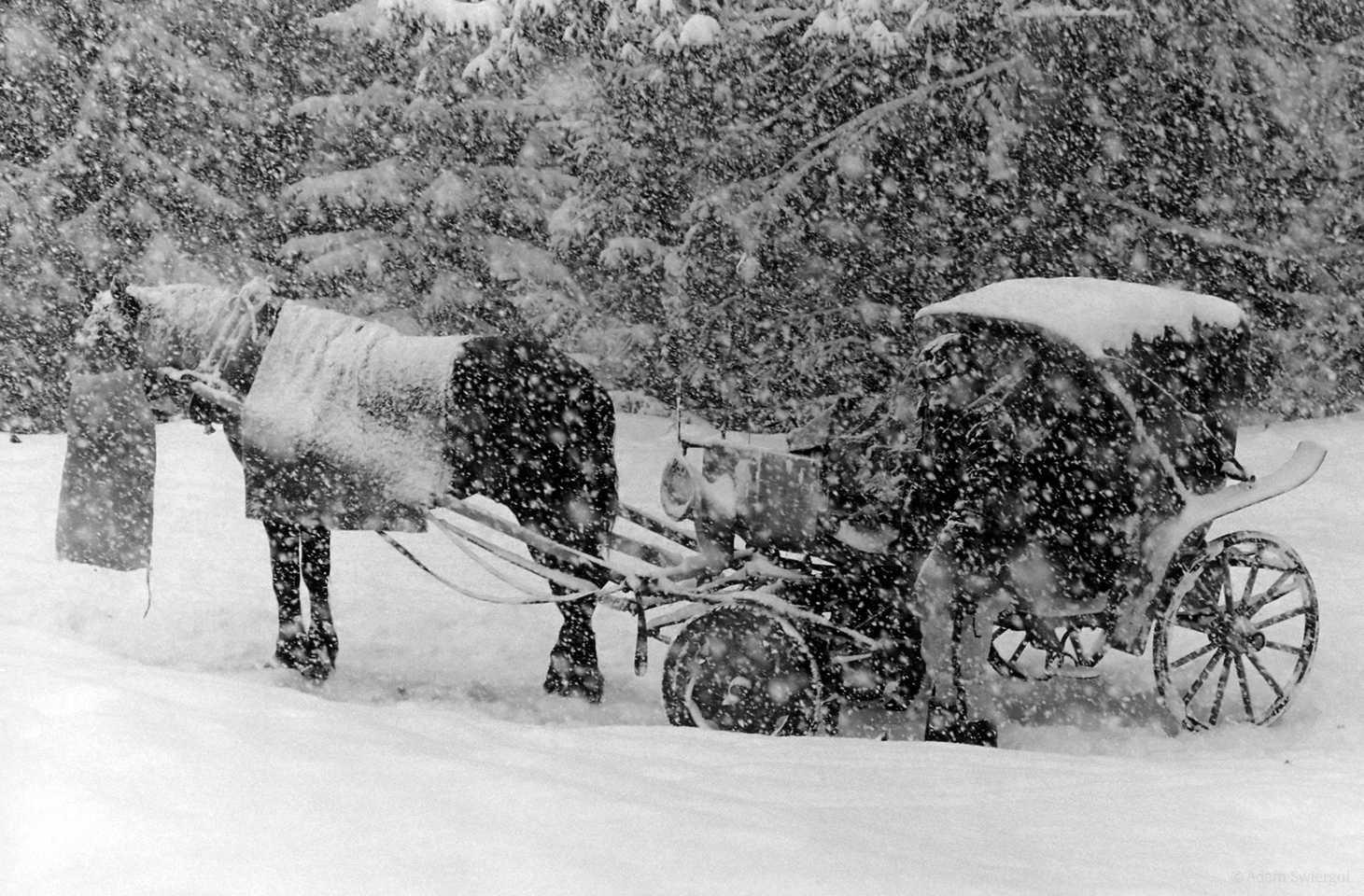 Dorożka w śniegu