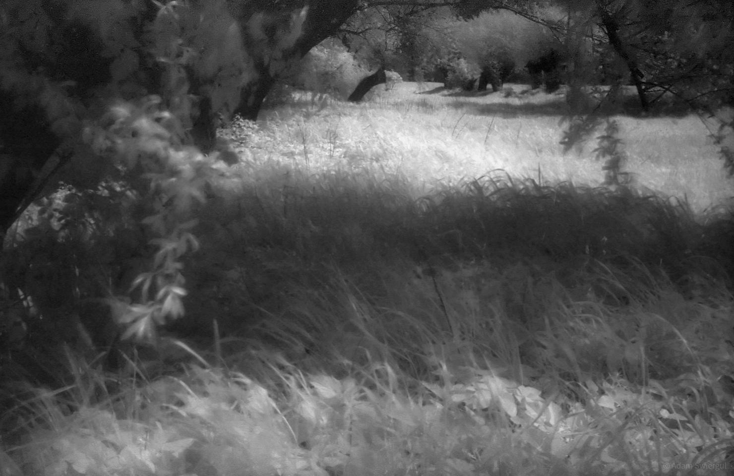 Drzewa i łąka