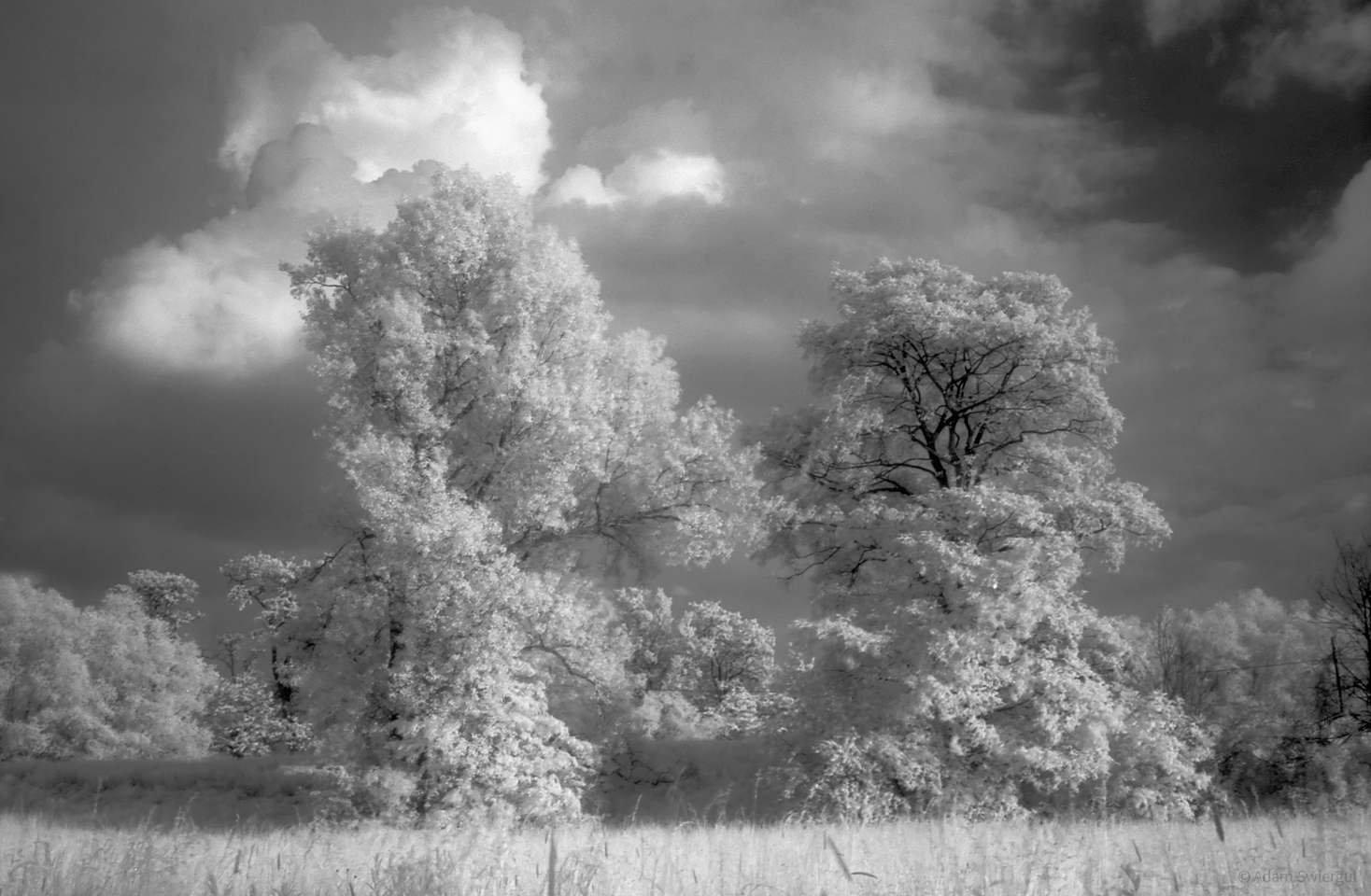 Drzewa i chmury - fotografia w podczerwieni