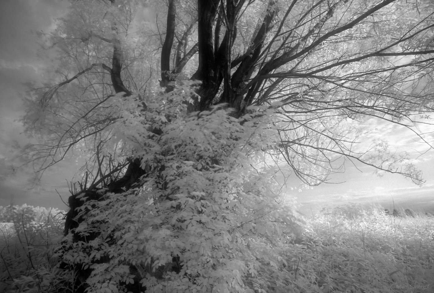 Drzewo i krzak