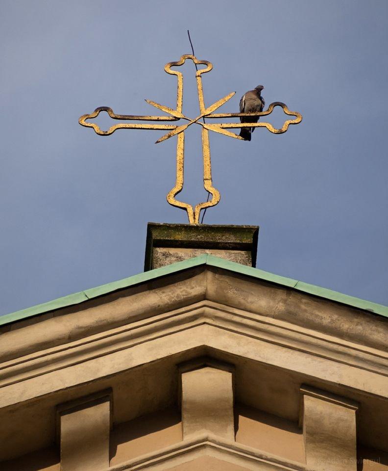 Gołąb na krzyżu