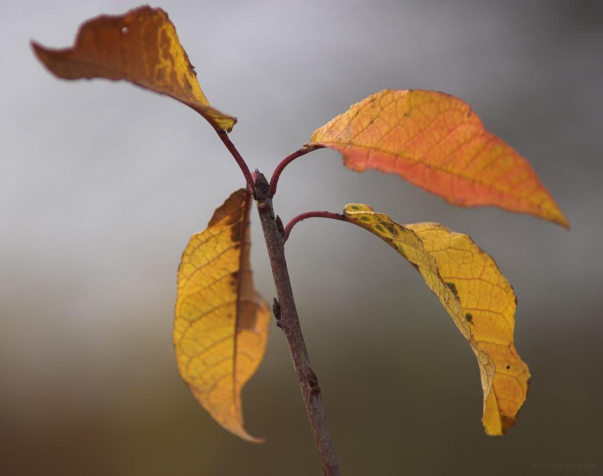 Jesienna gałązka