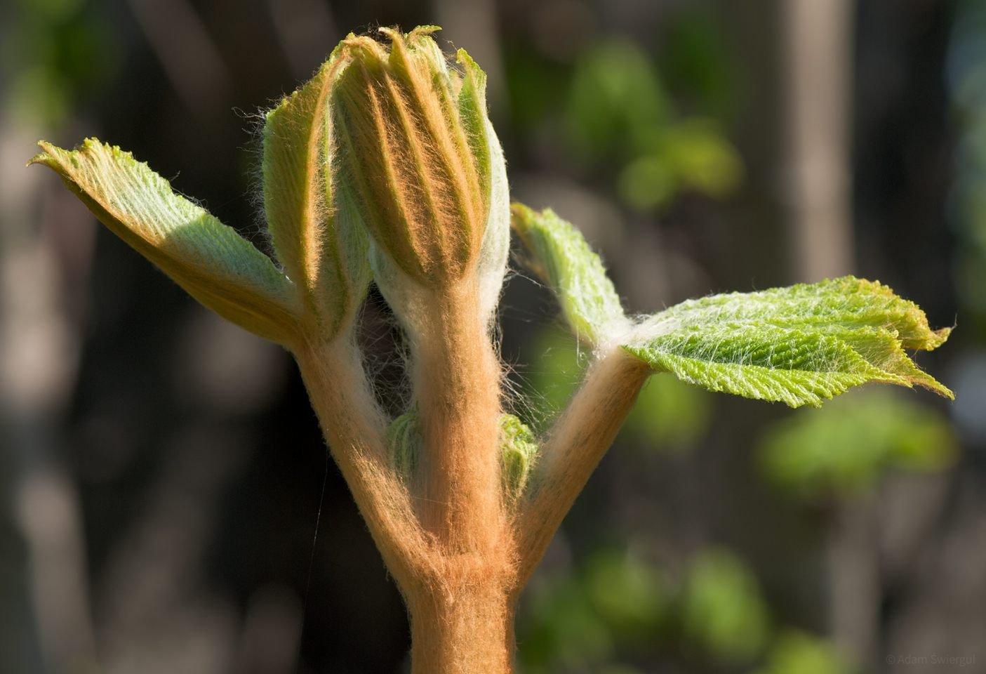 Młode liście