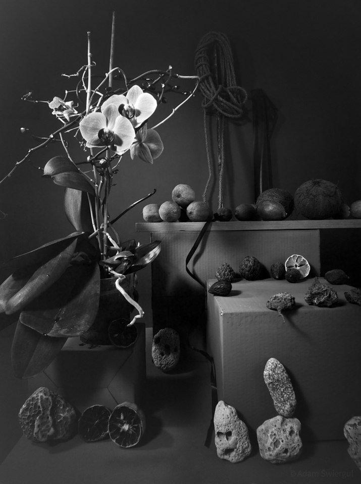 Otworkowa ze storczykiem i kamieniami