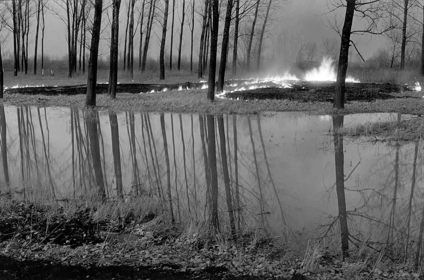 Lasek płonie