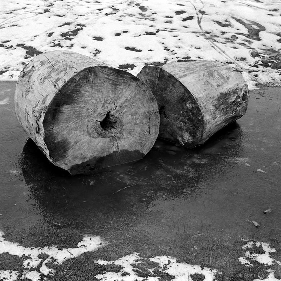 Pnie w lodzie