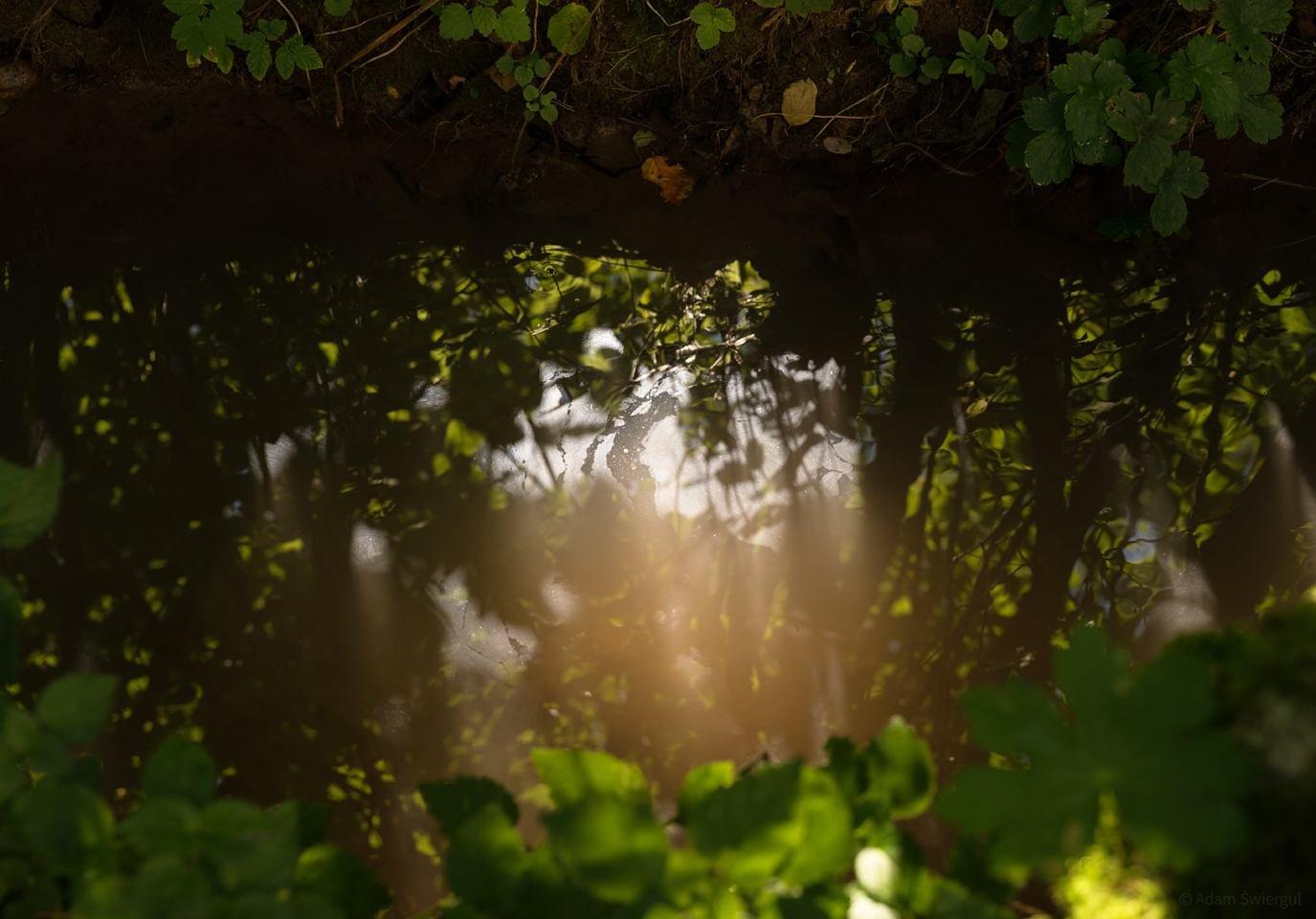 Potok - Rezerwat Zimny Dół