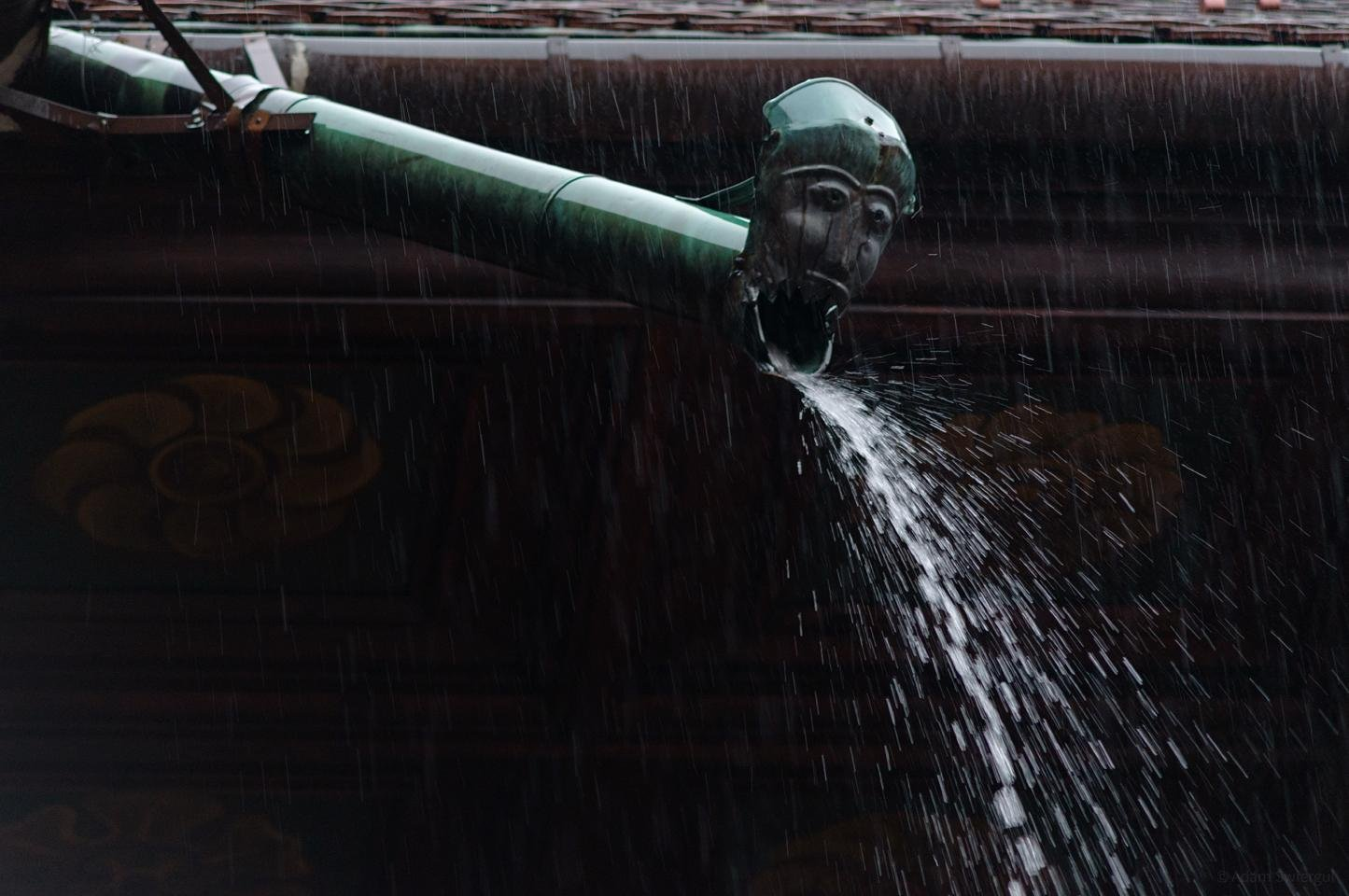 Rzygacz 2 podczas deszczu