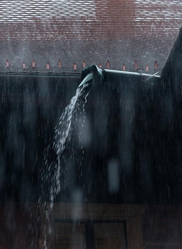 Rzygacz podczas deszczu
