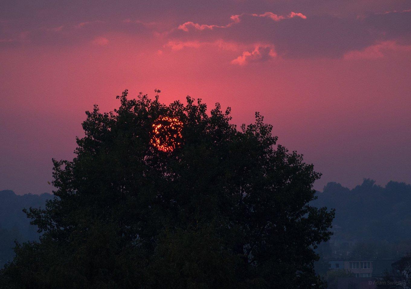 Słońce za drzewem