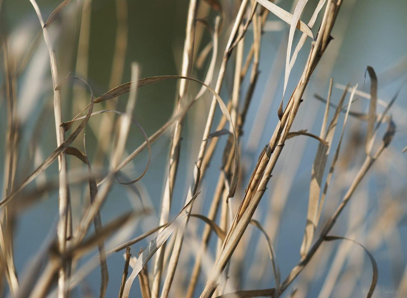 Suche trawy