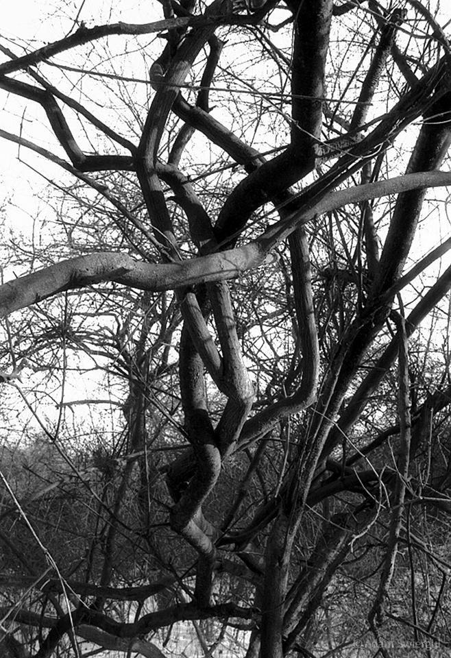 Taniec gałęzi